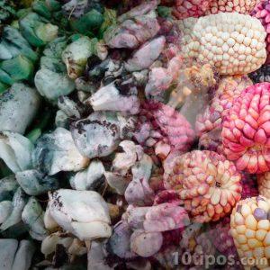 Mazorcas con hongo llamado huitlacoche