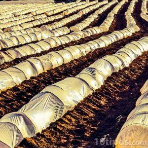 Campo sembrado con invernaderos de túnel
