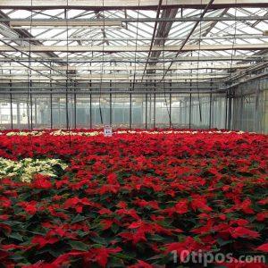 Invernadero para la cosecha de flores