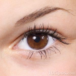 Ojo de color café de mujer