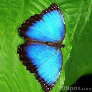 Insecto tipo mariposa de color azul brillante