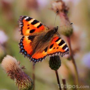 Mariposa de colores vivos como naranjas y amarillos