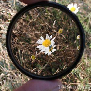 Flor vista con un filtro de cámara fotográfica
