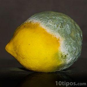 Fruta acida en proceso de descomposición