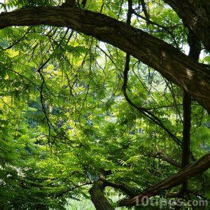 Árbol en la selva