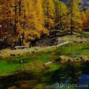 Bosque con río