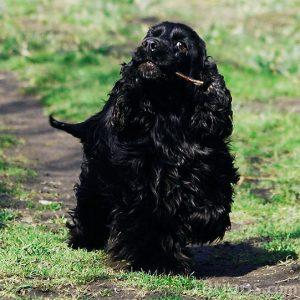 Cachorro corriendo