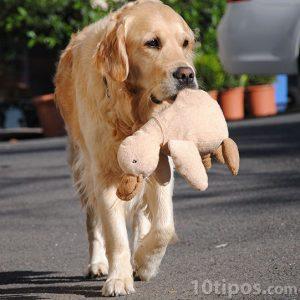 Canino caminando