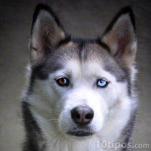 Perro de nieve