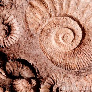 Fósiles de caracol