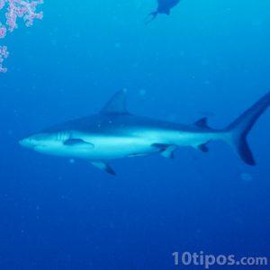 Depredador del mar
