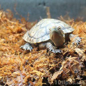 Reptil pequeño