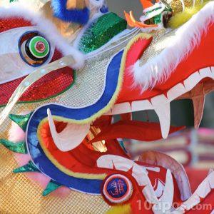 Cabeza de dragón chino