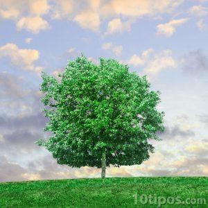 árbol verde y frondoso en la colina