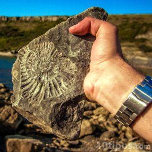 Persona sosteniendo un fósil