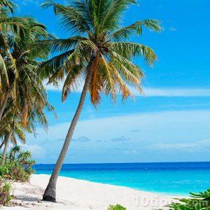 Palmera en playa con mucho sol